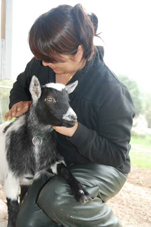 Animal Wellbeing Practitioner - Goat Healing
